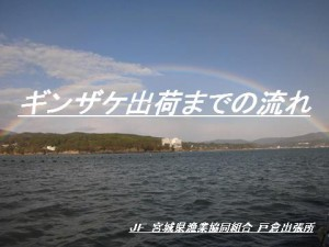 hiramoto_08